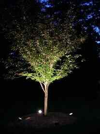 best floodlights for trees
